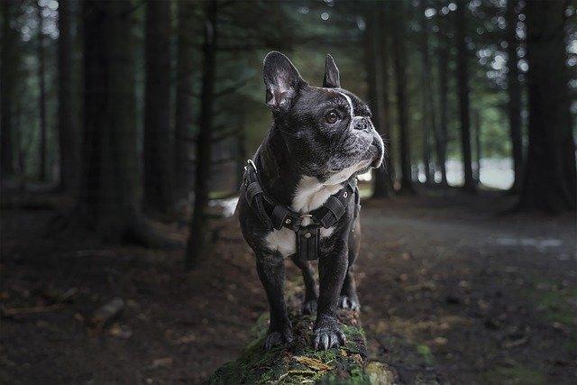 Fluffy hundeseng: Giv din hund en blød og dejlig soveplads
